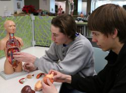 Anatomical Models in The Learning Center 2-1-17 (13)